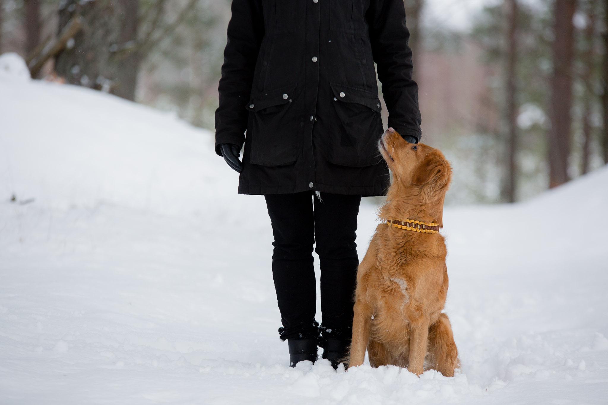 Annatarfoto hundfotografering Kallinge Ronneby golden retriever
