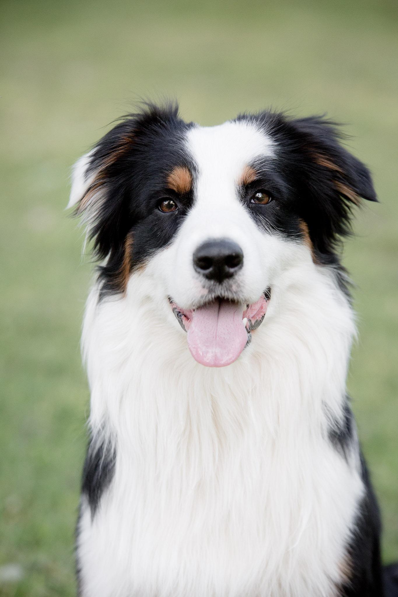 Annatarfoto hundfotografering djur hund Karlsnäsgåden Ronneby